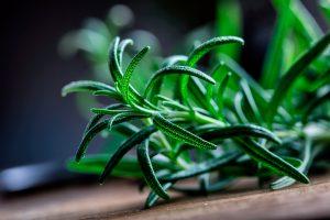 romero-planta