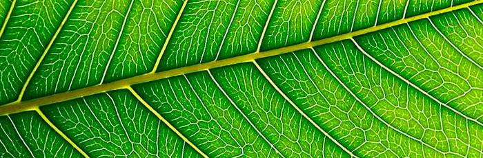 Plantas medicinales y suplementos alimenticios