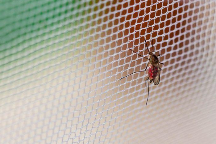 mosquito-trampa