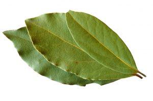 Laurel-Bay-Leaves