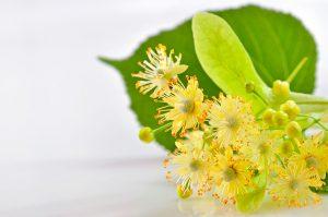 Tilo-Linden-Flowers