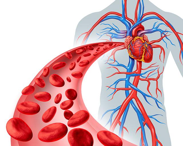 Mejorar-circulacion-sanguinea-2