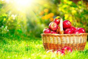 Manzanas-cesto