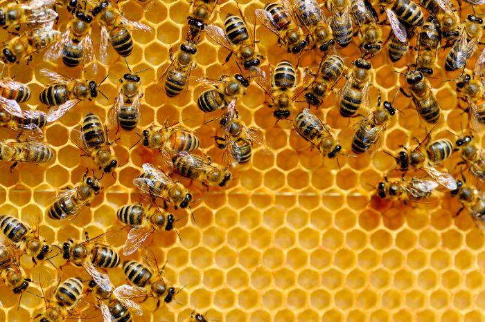 abejas-colmena-miel-jalea-real