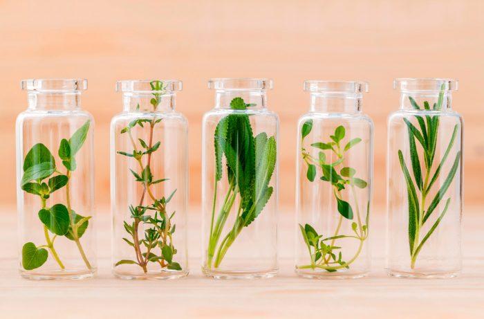 aceites-esenciales-hierbas