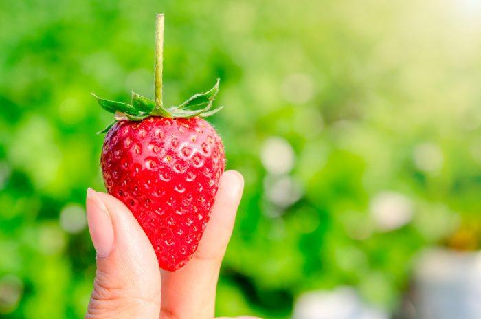 fresas-fruta (8)