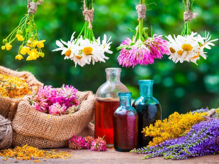 hierbas-plantas-medicinales