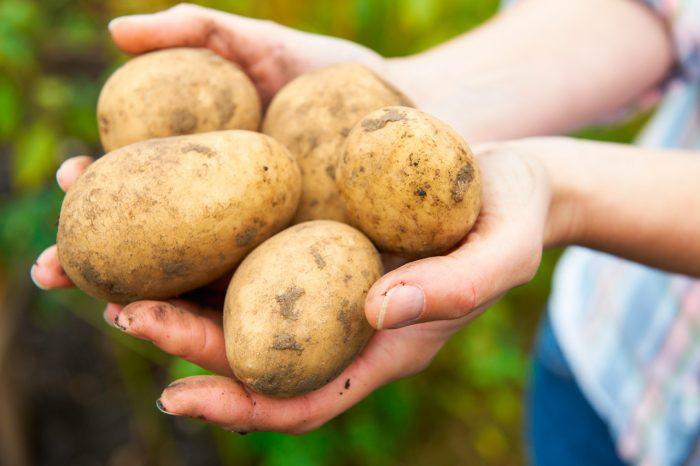 patatas-papas