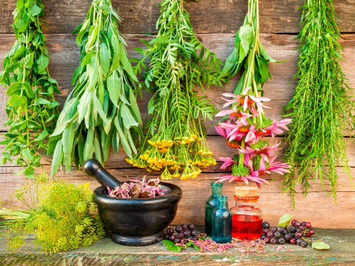 especias-plantas-medicinales-2