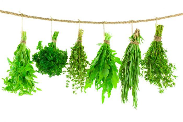 especias-plantas-medicinales