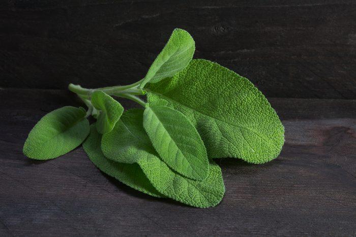 fresh sage leaves salvia officinalis on rustic dark wood closeup with selective focus