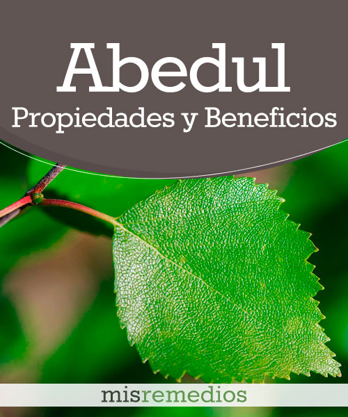 Abedul