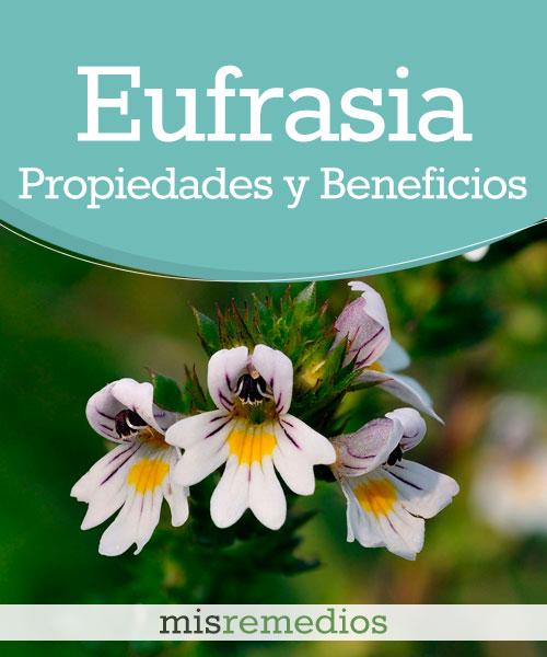 Eufrasia