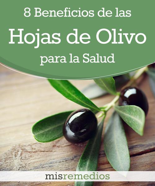 8 Beneficios de las Hojas de Olivo para tu Salud que te Encantará Conocer