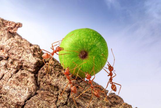 Cómo Mantener a las Hormigas Alejadas de tu Casa